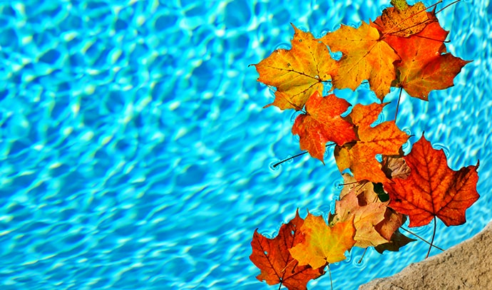 autumn-fall-leaves-falling-swimming-pool