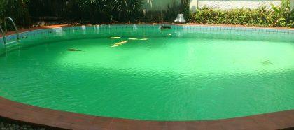 Si todo está controlado, ¿por qué se me pone el agua verde?